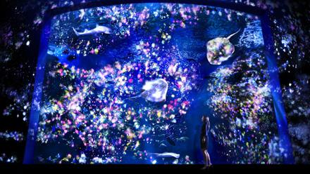 必見!新江ノ島水族館の夜イベント「ナイトワンダーアクアリウム2015」